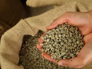 Materia prima de Café