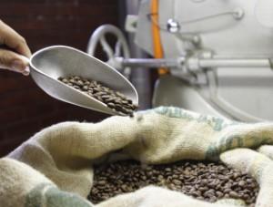 Café de grano, molido o molido percolado